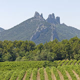 Vineyard in Gigondas. Provence. Gigondas mountain with vineyard. France. Provence stock photo