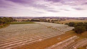 Vineyard in Gippsland, Australia. Vineyard covered with protective mesh netting to keep away birds. South Gippsland, Australia Stock Image