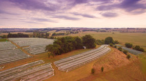 Vineyard in Gippsland, Australia. Vineyard covered with protective mesh netting to keep away birds. South Gippsland, Australia Stock Photo