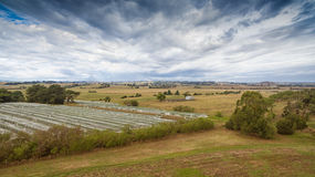 Vineyard in Gippsland Royalty Free Stock Photo