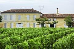Vineyard in Gironde (Aquitaine) Royalty Free Stock Photos