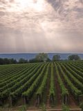 Vineyard in God's garden. Summer afternoon in St. George hill. Hungary. The sun shining across the clouds, makes similar stripes, like the vineyard's stripes Stock Photography