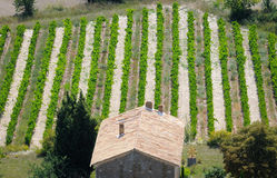 Vineyard in Gordes Royalty Free Stock Photo