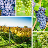 Vineyard and grape collage Royalty Free Stock Images