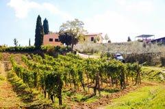 Vineyard in Stock Photography