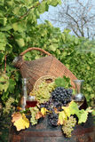 Vineyard grape and wine Stock Images