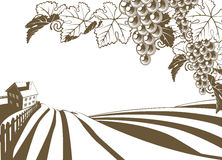 Vineyard Grapevine Farm Illustration stock illustration