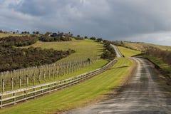 Vineyard on grassy slope stock photos