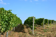 Vineyard grounds Royalty Free Stock Image