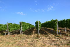 Vineyard grounds Stock Photo