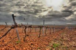 Vineyard in Guadiana river lands Stock Image