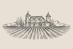 Vineyard. hand-drawn sketch. vector illustration Royalty Free Stock Photography