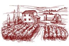 Vineyard hand drawn vector illustration sketch Stock Photos