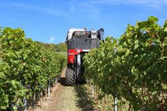 Harvesting grapes by a combine harvester. The vineyard / Harvesting grapes by a combine harvester Royalty Free Stock Images