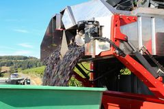 Harvesting grapes by a combine harvester. The vineyard / Harvesting grapes by a combine harvester Stock Photo