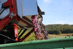 Harvesting grapes by a combine harvester. The vineyard / Harvesting grapes by a combine harvester Royalty Free Stock Image