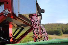 Harvesting grapes by a combine harvester. The vineyard / Harvesting grapes by a combine harvester Stock Images