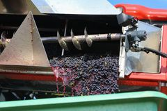 Harvesting grapes by a combine harvester. The vineyard / Harvesting grapes by a combine harvester Stock Photography