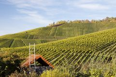 Vineyard and hause Stock Image
