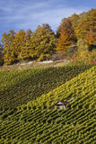 Vineyard and hause Royalty Free Stock Photo