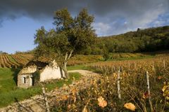 Vineyard in the heart of the Jura, Arbois, France Royalty Free Stock Photography