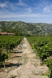 Vineyard and highlands. Vineyard highlands italy piedmont travel Royalty Free Stock Photography