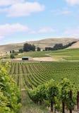 Vineyard hill Royalty Free Stock Photo