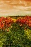 Vineyard on the hill Stock Photos