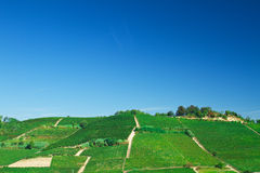 Vineyard on a hill Stock Images
