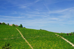 Vineyard on a hill Royalty Free Stock Images