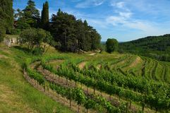Vineyard in hill Stock Photo