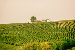 Vineyard hill, agricultural background Stock Images