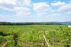 Vineyard hill Royalty Free Stock Photography