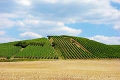 Vineyard hill Stock Photos