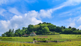 Vineyard on the hill and blue sky Stock Image
