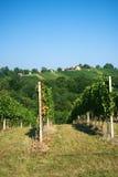 Vineyard at hill Stock Photos