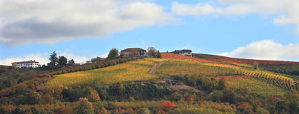 Vineyard hill at fall. Piedmont, Northern Italy. Stock Image