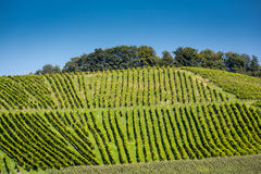 Vineyard on a hill Royalty Free Stock Photos