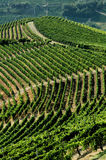 Vineyard in the hill number two stock photo