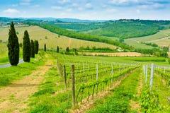 Vineyard Hills and Cypresses Royalty Free Stock Photos