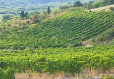 Vineyard on the hills Stock Photo