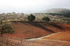 Vineyard Hills. Shadowed vineyard hills in Autumn Royalty Free Stock Photos