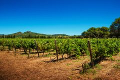 Vineyard and hills - agriculture, countryside landscape Stock Photos
