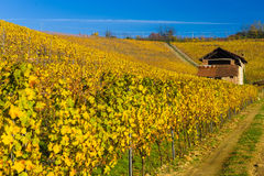 Vineyard hills in Autumn Stock Photo