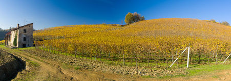 Vineyard hills in Autumn Royalty Free Stock Photography