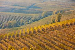 Vineyard and hills in autumn with yellow and brown leaves in Italy Stock Photography