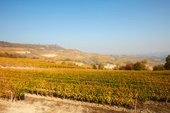 Vineyard and hills in autumn with yellow leaves in a sunny day in Italy. Vineyard and hills in autumn with yellow leaves in a sunny day in Piedmont, Italy Stock Image