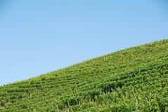 Vineyard of Langhe, Piedmont - Italy Royalty Free Stock Photos