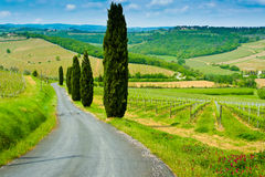 Vineyard Hills and Cypresses Stock Images
