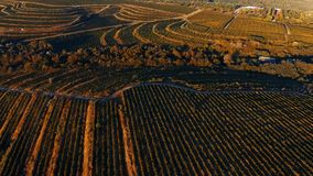 Vineyard hills from drone. Rows of vineyard before harvesting in Dobrogea, Romania Europe, aerial view from drone, Highway crossing the fields. Sunlight stock video footage